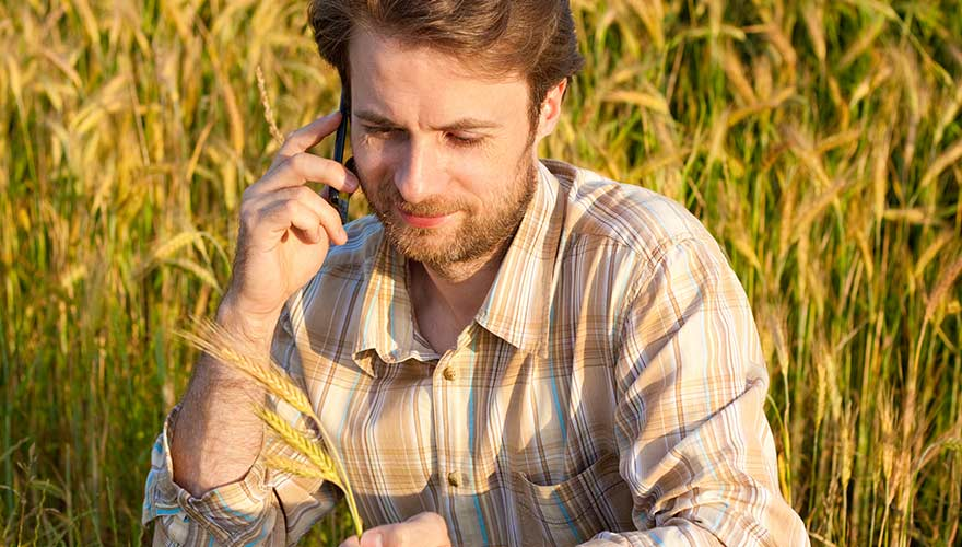 Man talking on smartphone in the middle of a wheat field